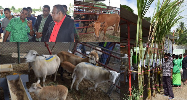 Farmers Learn More From Agri Show In Tavua