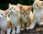 Adopt-A-Cat Month Opens