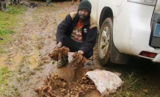 Ginger Farmers Doing Well