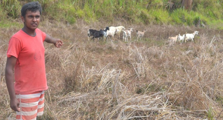 Goat Farmer Moves Herd Around For Survival
