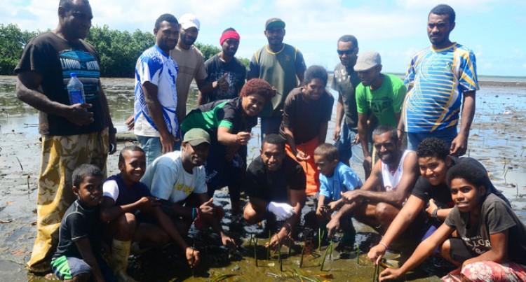 Kinoya Villagers Plant 2500 Mangroves