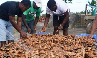 Agriculture Ministry Ready To Support Ginger Farmers