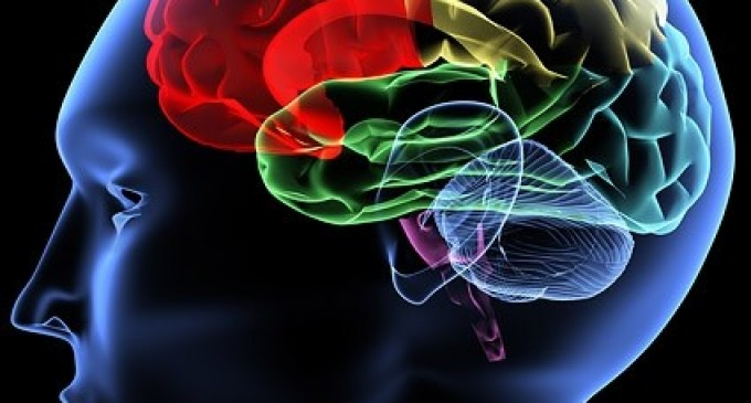 Do You Get Enough of the Nutrient That Boosts Your Brain?