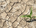 Drought May Force Farmer To Stop