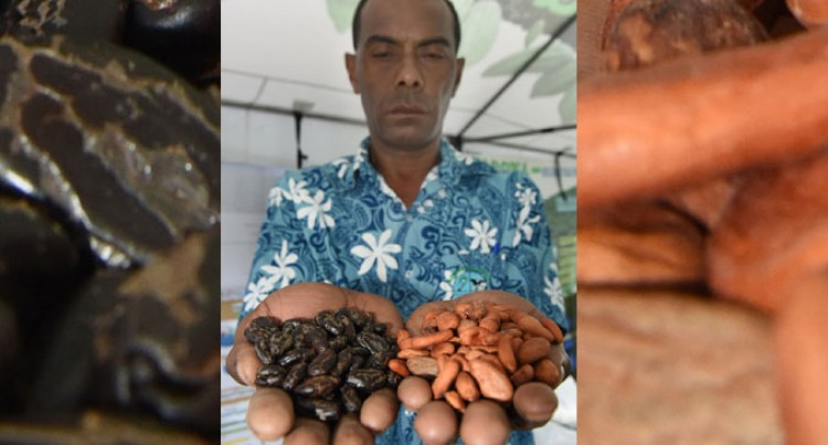 Cocoa Farming Has Potential