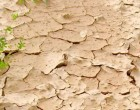 Dry Spell  Affects Bua Dalo  Supply