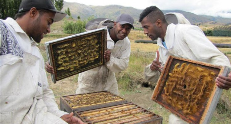 200 Beekeepers Trained
