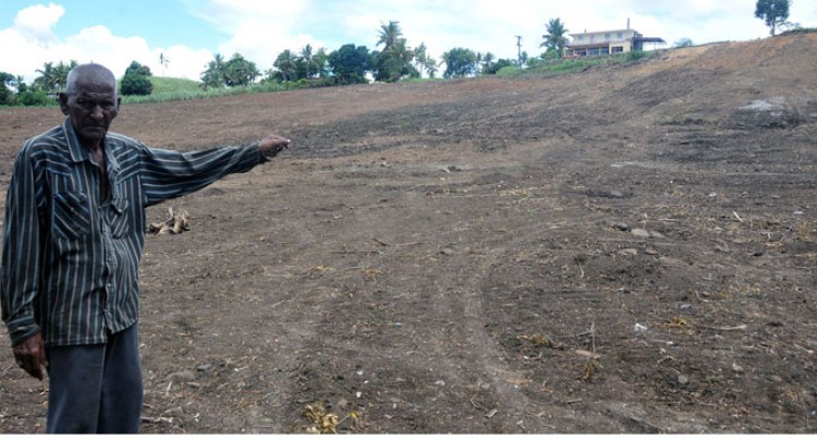 Bulldozed Crops Pains Farmers