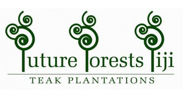 Future Forests optimistic despite piling losses in first six months of financial year