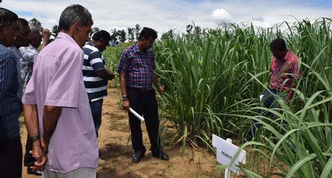 Improving Modern Agriculture Through Inter-cropping