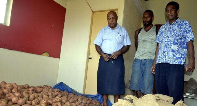 Three Tonnes Potatoes Harvested In Nadi