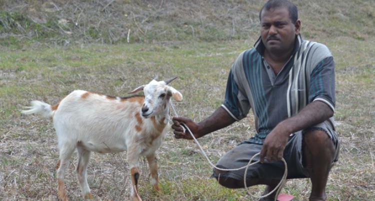 Concern My livestock Will Die: Mani