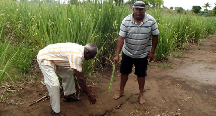 Farmer Verma hopes for recovery in rain