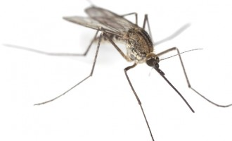 Rainy season is here: Help destroy mosquito breeding grounds
