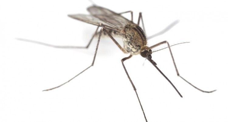 Rainy season is here: Help destroy mosquito breeding grounds