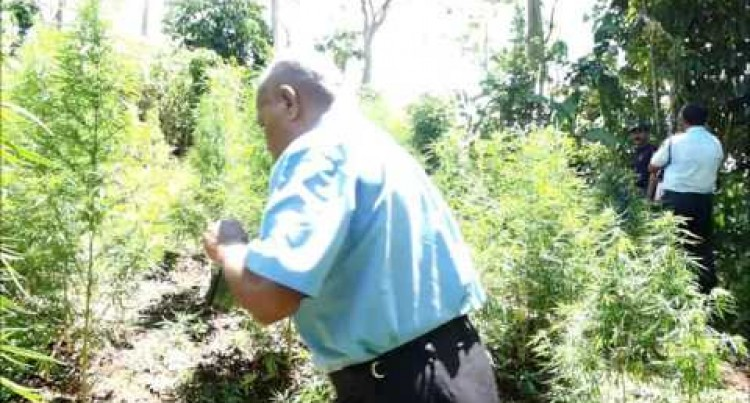 Another Drug Bust In Central Suva