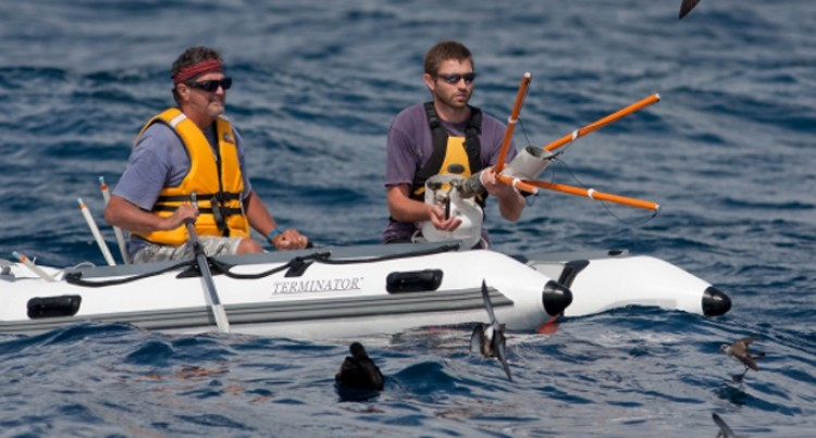 The Search For Fijian Petrels Starts