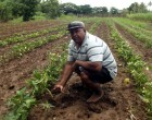 Farmers Urged To  Plant Progressively