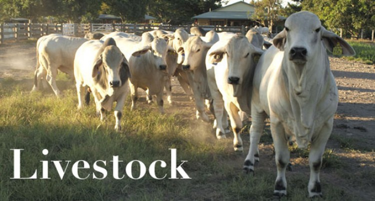 Stakeholders Gather To Validate Draft Livestock Sector Strategy
