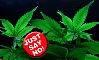 Cakaudrove Joins The Fight Against Marijuana Cultivation