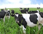 $14 Million Project By New Zealand To Help Improve Our Dairy Industry