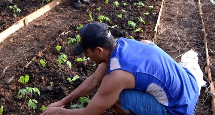 Seedling Distribution to Boost Agriculture