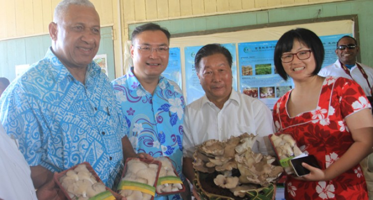 China's Papa Juncao Brings Mushrooms, New Livelihood