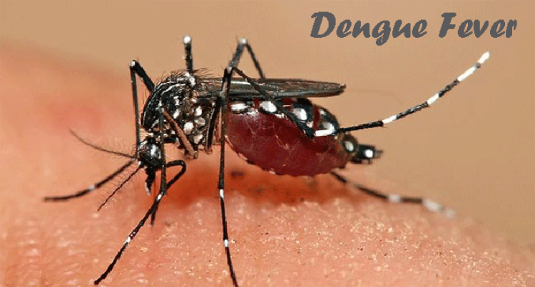 131 Dengue  Cases Confirmed