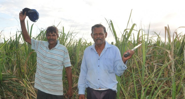 $18million Early Pay For  Affected Cane Farmers