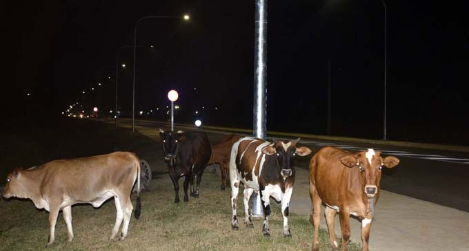 Keep Animals Off Our Roads, Says Dr Raju