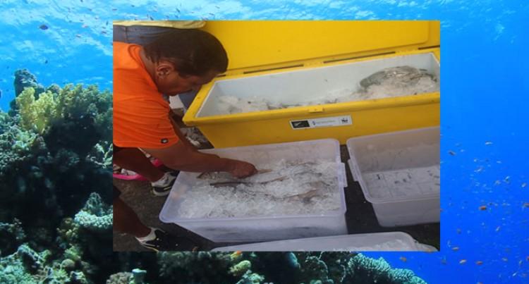 Ice Key To Preserve Seafood: WWF