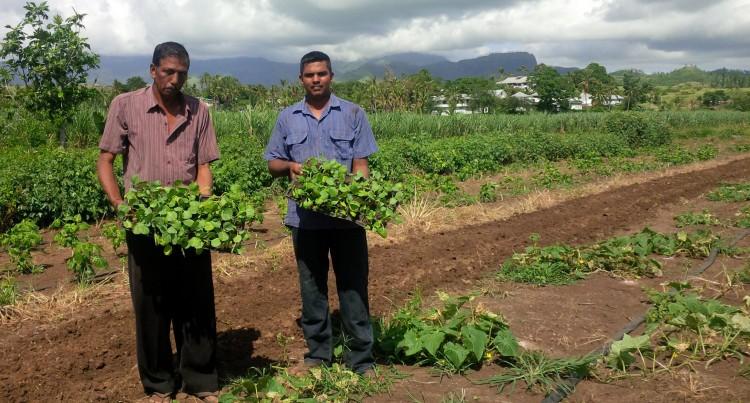 Farmer revives farm with seedling distribution