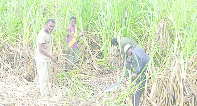Labasa Mill Set For June, Says Christopher
