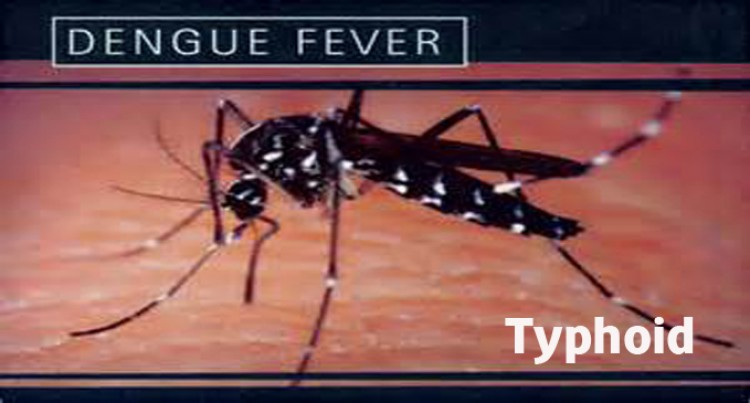 200 Dengue Fever, 23 Typhoid Cases Recorded