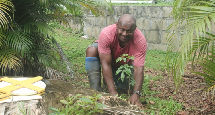 Editorial: Plant A Tree Today For The Sake Of Our Children