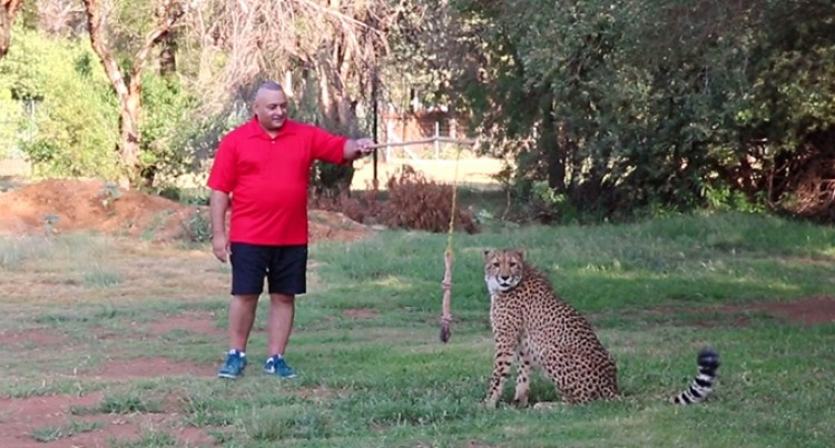 CHEETAH,  The Fastest Land Animal on Earth