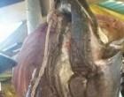 Makavu, 40, Hooks In A Big One
