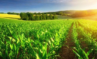 Ratu Makutu Seeks Agriculture Help
