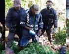Operation Cavuraka 3000 Marijuana Plants Found In Navosa
