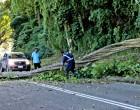 Fallen Tree Causes Traffic Jam