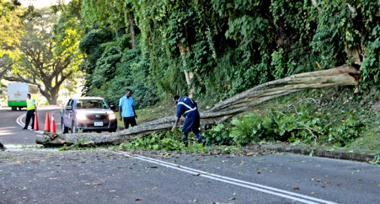 Fallen Tree Causes Traffic Jam