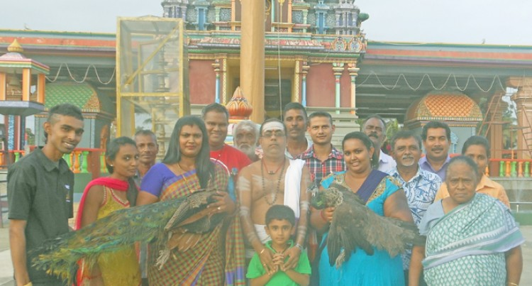 Nadi Temple Adopts Peacocks
