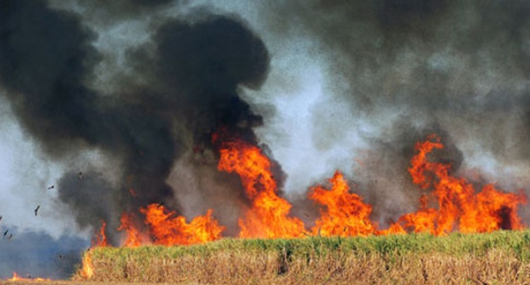 NFA Warns Against Cane Burning