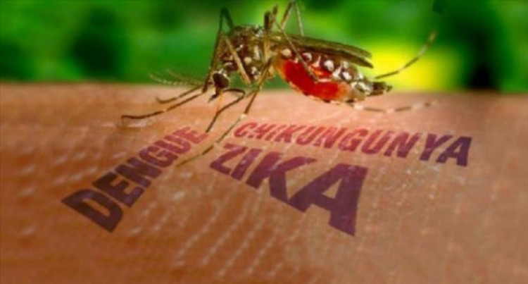 No Chikungunya, Zika In North