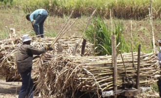 $1.677m Released For Delivery Cane Payment In North