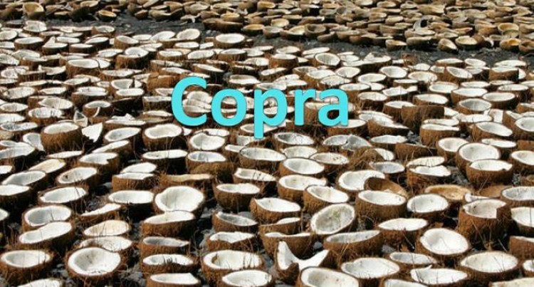 Copra Millers To Start VCO Factory Construction Early Next Month