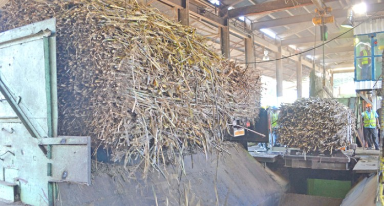 Farmers Urged Not To Supply Burnt Cane