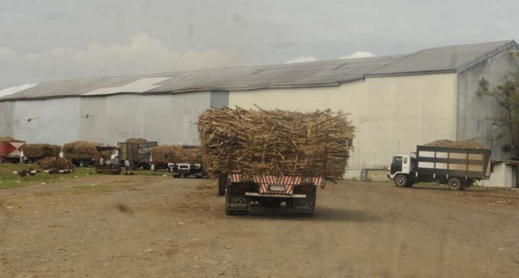 Low Cane Supply Due To Labour Shortage Reduces Crushing Capacity At Lautoka Mill