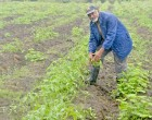 Rains Bring Hope For Farmer