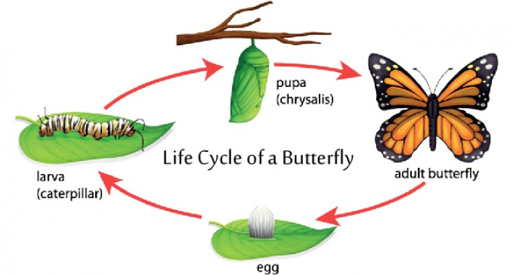From A Caterpillar To Butterfly – A Journey Of LEARNING